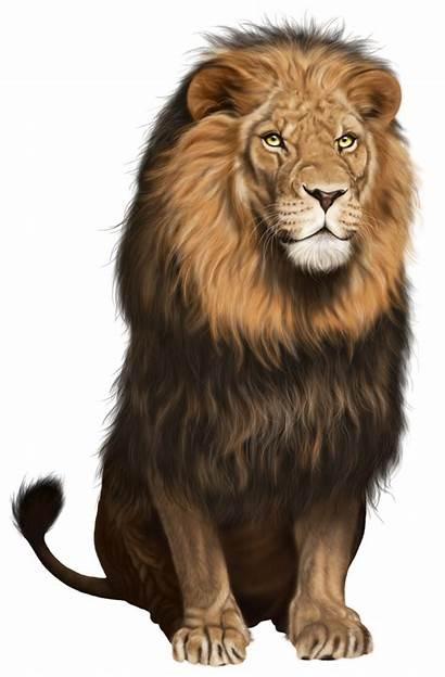 Lion Transparent Clip Pluspng