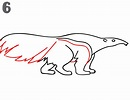 How To Draw an Anteater - Step-by-Step