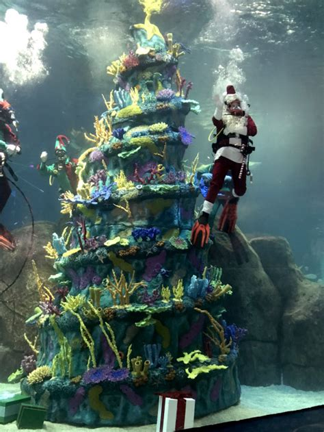 a parent s guide to adventure aquarium s christmas
