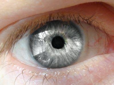 silver eye color eye color pentucket profile