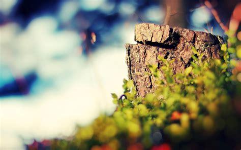 hd photography backgrounds  hipwallpaper