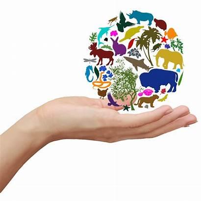 Biodiversity Diversity Clipart International Organism Ecology Transparent