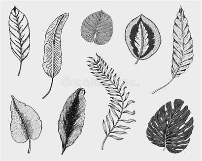 Fern Leaf Botany Monstera Exotic Banana Palm