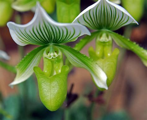 green slipper orchid take over of the clover florist with flowers