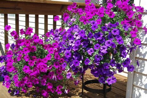 Welche Balkonpflanzen Für Sonnigen Balkon Wählen