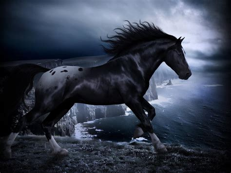 hd black horse wallpapers pixelstalknet