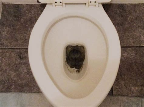 toilet bowl stains remove mold cleaning brown 101cleaningtips clean rid bathroom learn foam archives tag read deep tips