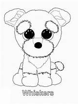 Beanie Boo Coloring Whiskers Printable Boos Draw Categories Puppy sketch template