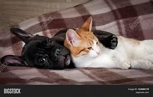 White Cat Black Dog Sleeping Image & Photo | Bigstock