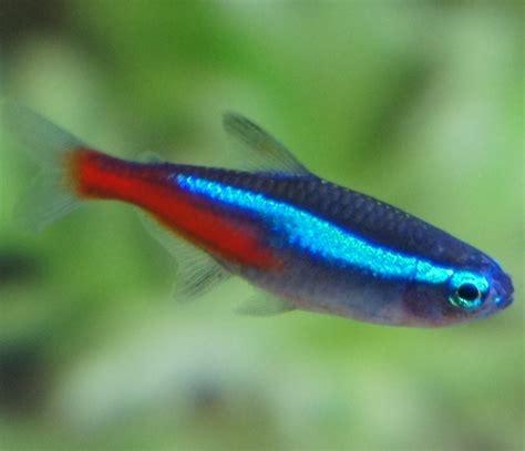pet fish varieties  kids    pets central