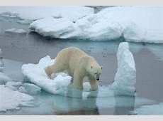 Norte de Spitsbergen, oso polar y fauna ártica del 25 de