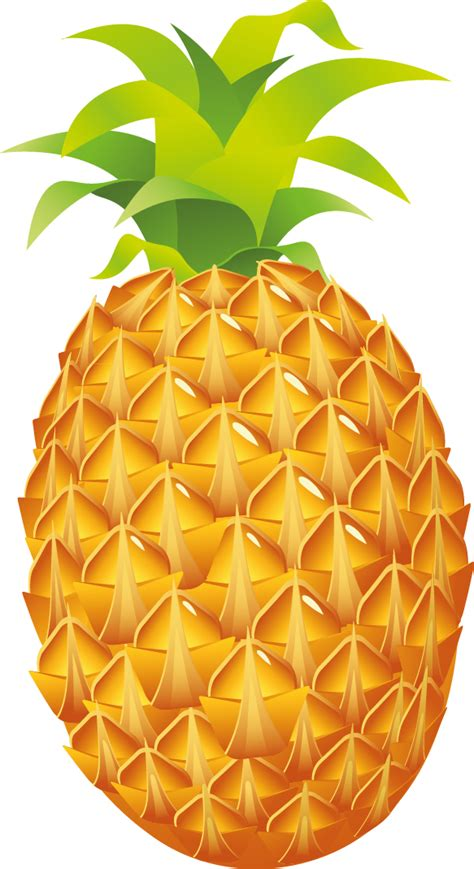 Animated Pineapple Wallpaper - wallpaper clipart pineapple pencil and in color