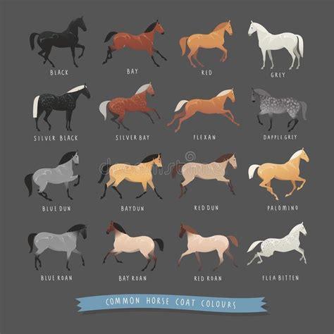 horse roan coat grey common dun dapple colours silver colors cavallo rare pferd allgemeine horses comuni cappotto colori vector inzameling