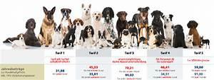 Hunde Größe Berechnen : hundeversicherung im vergleich berechnen g p makler ~ Themetempest.com Abrechnung