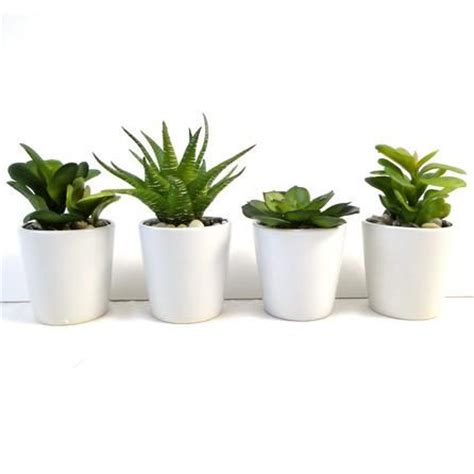 pot plants for the bathroom green succulent plant in ceramic pot dunelm home