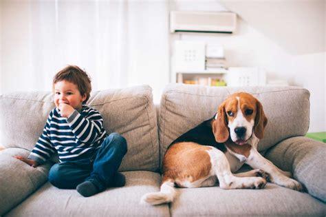 como impermeabilizar sofá de suede como impermeabilizar sof 225 produtos tecidos e dicas