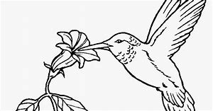 HD Wallpapers Kingfisher Bird Coloring Page