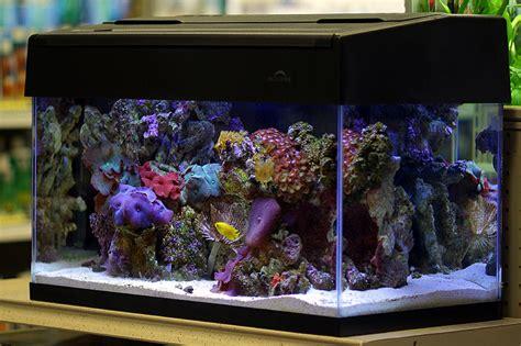 nano marine aquarium setup nano reef aquarium secrets simplicity is key reef builders the reef and marine aquarium