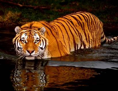 Animated Animal Animals Cool Wallpapers Desktop Awesome