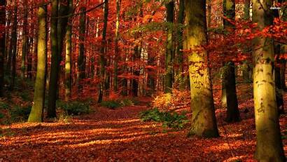 Forest Desktop Autumn Wallpapers Fall Backgrounds Nature