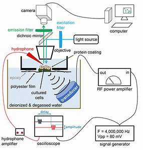 Multiplexing Focused Ultrasound Stimulation With