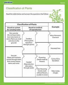 Classification Of Plants