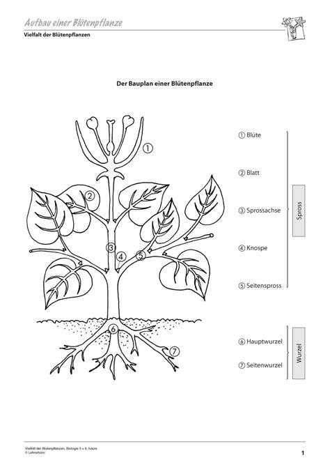 deckblatt biologie klasse   medieval future