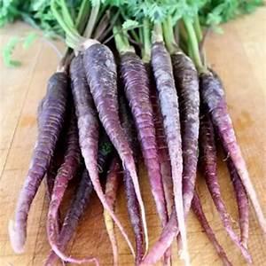 500pcs Dragon Purple Carrot Seeds Organic Heirloom ...