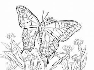 Ausmalbilder Schmetterling Zum Ausdrucken Kostenlos Fr