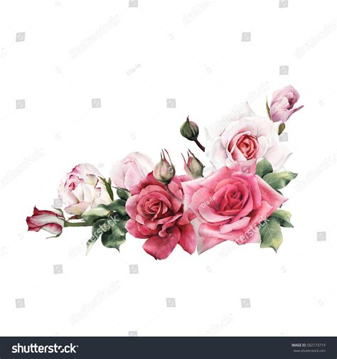 bouquet roses watercolor    stock illustration