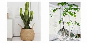 meuble plante interieur With déco chambre bébé pas cher avec livraison plantes