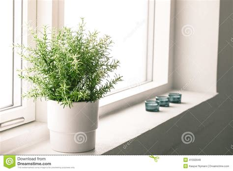 Best Pot Plant For Bathroom by Indoor Plant In A Bathroom Window Stock Photo Image