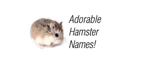 hamster names dwarf hamster names dwarf hamster types