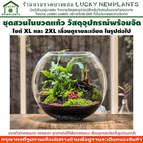 ชุดจัดสวนในขวดแก้ว DIY ไซต์ XL และ 2XL สวนขวดแบบเปิด ขวด ...