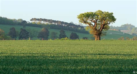 garden landscapes capability brown landscape designer behind england s most iconic gardens architectural digest