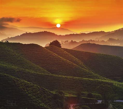 morning  cameron highlands