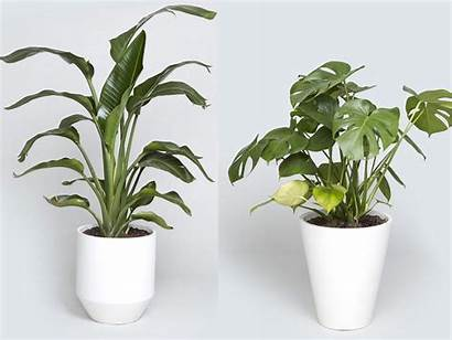 Indoor Trees Grow Plants Urn Bios Tree