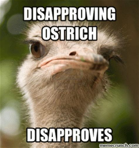 Ostrich Meme - the gallery for gt funny ostrich jokes