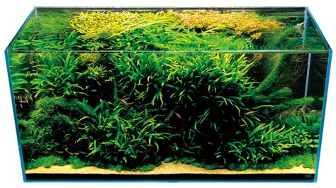 Amano Aquascape by Takashi Amano Nature Aquarium Aquascapes T A G