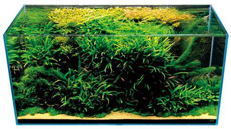 aquascape amano takashi amano nature aquarium aquascapes t a g