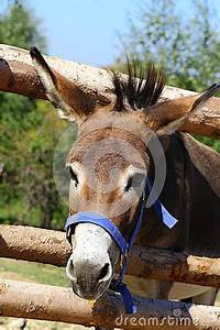 Funny Donkey Pictures With Captions