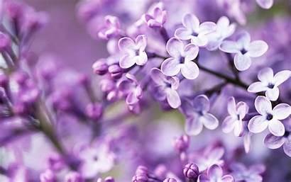 Purple Flowers Spring Wallpapers 1050 1680 Widescreen