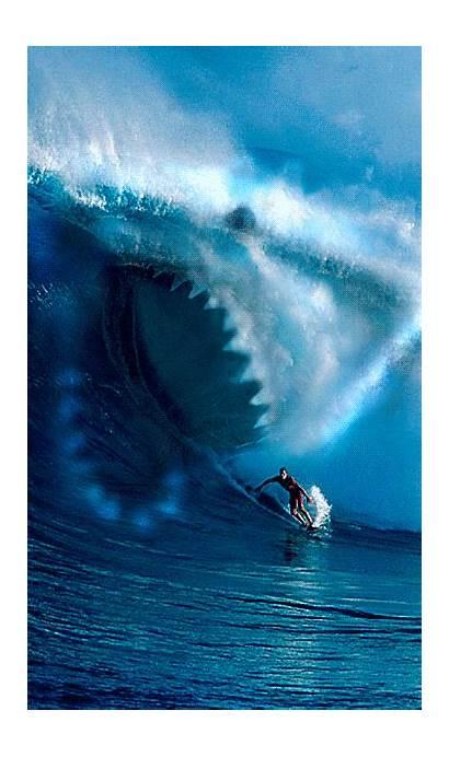 Shark Surfing Funny Wave Creepy Gifs Surf