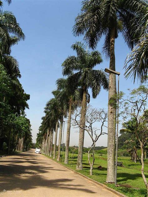 de brazil palm gardens a local s guide to the best things to do in sao paulo