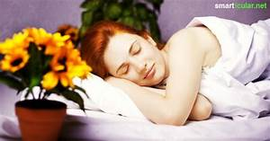 Trockene Luft Im Schlafzimmer : zimmerpflanzen als nat rliche einschlafhilfe und f r ~ Lizthompson.info Haus und Dekorationen