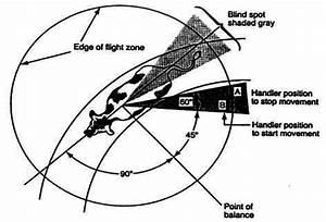 A  Flight Zone Diagram Source  Grandin  Bch