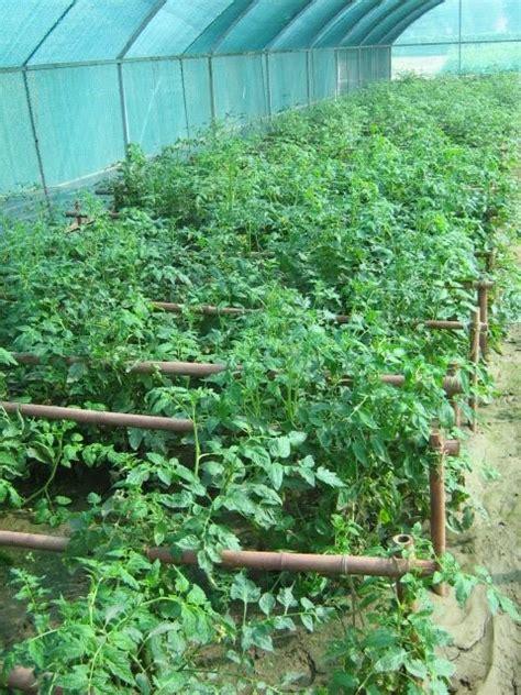 agroforestry blog agrihortisilviculture
