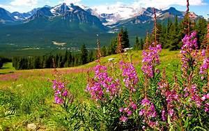 Mountain Landscape Splendid Purple Mountain Flowers ...
