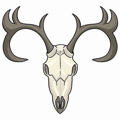 Deer Skull Draw Drawing Step Easy Cartoon