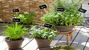 Plantes En Pot Pour Terrasse : comment planter des herbes aromatiques sur son balcon ~ Dailycaller-alerts.com Idées de Décoration